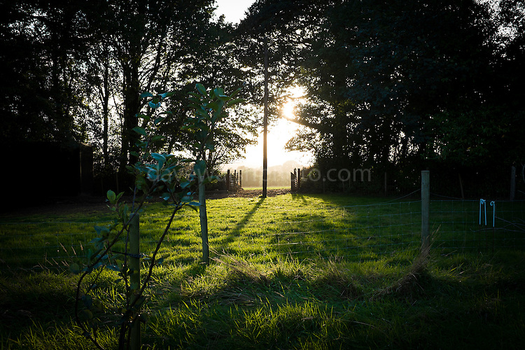 Sunset through a farm gateway, Wexford.