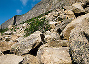Franconia Notch State Park - Subalpine cold-air talus shrubland community at the base of Cannon Cliffs, which is on the side of Cannon Mountain in the White Mountains, New Hampshire.