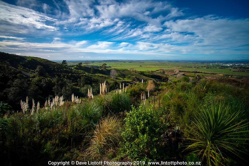 Papamoa Hills Regional Park in Bay Of Plenty, New Zealand on Friday, 7 June 2019. Photo: Dave Lintott / lintottphoto.co.nz