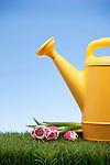 USA, Illinois, Metamora, Plastic watering can on lawn