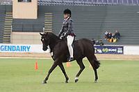 Heavyweight Hunter Pony over 12.2 NE 14hh