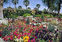 Petunias palm trees garden Palm Springs California