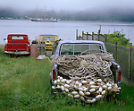 Vashon-Maury Island, WA<br /> Clearing morning fog on Quartermaster Harbor with historic pickup trucks and sailing ships - in Dockton