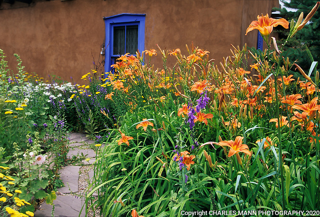 The gardens of Santa Fe,New Mexico, offer a constant suppply of delightful surprises and artful delights. On Canyon Road a blue window in an adobe wall is accented by a drift of orange day lilys.