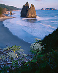 Olympic National Park, WA <br /> Seastacks and surf in evening light on Rialto Beach