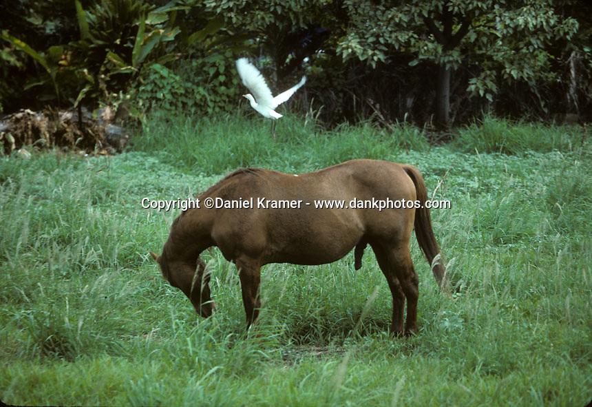 Molokai, 1996