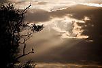 Kruger Park - Pafuri Region, Mpumalanga South Africa