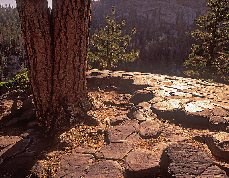 Glaciated tops of jointed columns and tree at Devil's Postpile National Monument, California