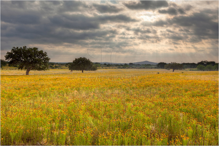 I was heading further north, but when I saw this field of golden wildflowers near Llano, Texas, I had to stop and capture the scene as the sun began to break through the clouds. One of the nice things about the Hill Country of Texas is that when searching for wildflowers in the spring, you never know what you'll find.