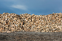 Large stack of split firewood.