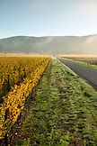 USA, California, Sonoma, Gundlach Bundschu Winery, morning light illuminates the road into the 150 year old vineyard