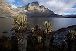 Laguna de la plaza (4200 m).Sierra del Cocuy