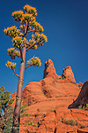 Century Plant and The Sisters, near Sedona, Arizona