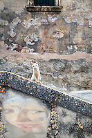 Who is looking at who? This cat blends with the steps and surroundings in Modica, Italy