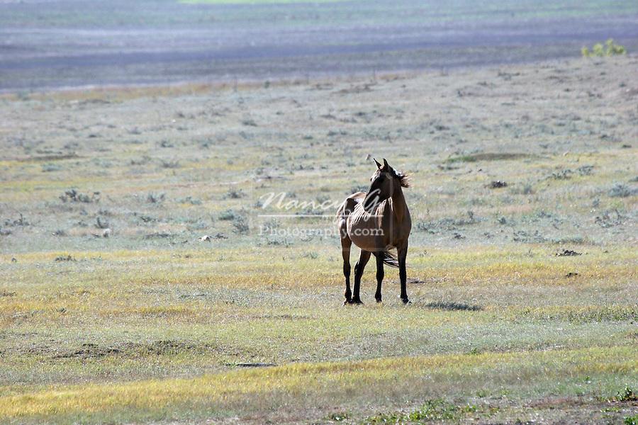 Wild Horse on the prairie of South Dakota