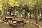 Israel, Upper Galilee, Ein Roím in Naftali Mountains forest