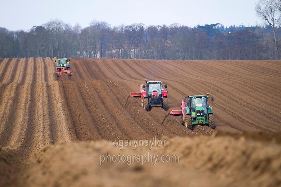 Destoning and planting main crop potatoes in Suffolk