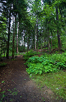 Trail showing bracken, ferns and moss covered trees in the forest. Deep Cove,Vancouver, British Columbia, Canada