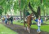 winning at Delaware Park on 5/18/15