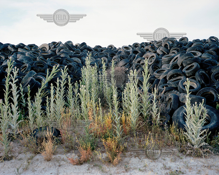 Plants in front of a large pile of tyres at a rubbish dump in Sesena.