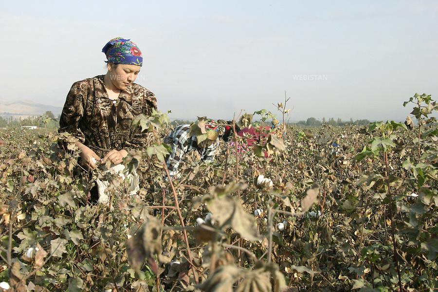 Tajikistan. October 2004. Cotton picking. Cotton is the most important cultivation in Tajikistan. Every year, the government sets objectives and a lot of women and students join their forces to harvest. Octobre 2004. Cueillette du coton. Le coton est la culture la plus importante du Tadjikistan. Chaque année, le gouvernement fixe des objectifs et beaucoup de femmes et d'étudiants se mobilisent pour la récolte.