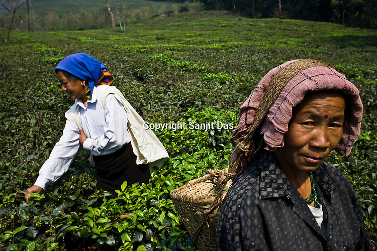 Pushpa Chettri, a 49 year old tea picker, right, poses for a photograph while picking the first flush tea leaves at the Makaibari Tea estate, in Darjeeling, India. Photographer: Sanjit Das/Panos.