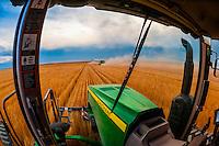 Wheat harvest, Schields & Sons Farming, Goodland, Kansas USA.