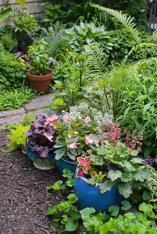 Container Gardens Pots, Festuca Blue Grass, Blue Pots, Alyssum Lobularia,  Purple Heuchera