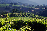WINE GRAPE VINEYARD - JOULLIAN VINEYARDS - CARMEL VALLEY, CALIFORNIA