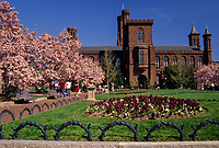 Smithsonian Institution Headquarters, The Castle, Washington, D.C.  Early Morning with Saucer Magnolia Trees in Bloom.  Enid A. Haupt Garden.
