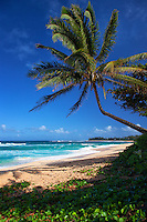 Relaxing on the Sandy Beaches of Hawaii