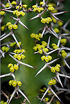 Yellow flowers interwoven in cactus spines