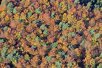 Herbstwald:DEUTSCHLAND, SCHLESWIG- HOLSTEIN 30.10.2005:Sachsenwald,  Laubbaeume, Nadelbaeume, Mischwald, Herbst, Laubfaerbung