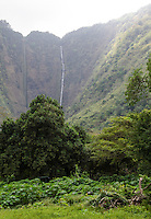 Hi'ilawe Falls in the back of Waipi'o Valley, Hamakua District, Big Island.
