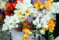 Fragrant Flowers Fragrance Garden Stock Photos