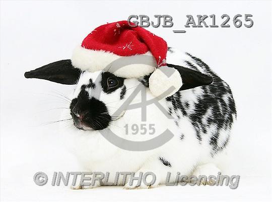 Kim, CHRISTMAS ANIMALS, photos(GBJBAK1265,#XA#) stickers
