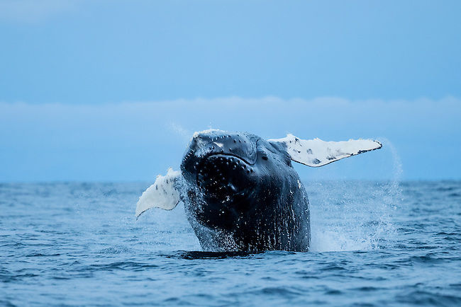 &quot;Inverted&quot;<br />