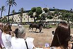 27 June 2009: Fans watch as Zenyatta makes her way toward the paddock for the Vanity Handicap (GI) at Hollywood Park in Inglewood, CA
