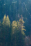 Raining spider webs, Mineral King, Sequoia National Park, California