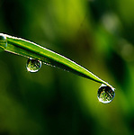 Early morning on the Schulenberg Prairie<br /> <br /> Dewdrops on the prairie grasses