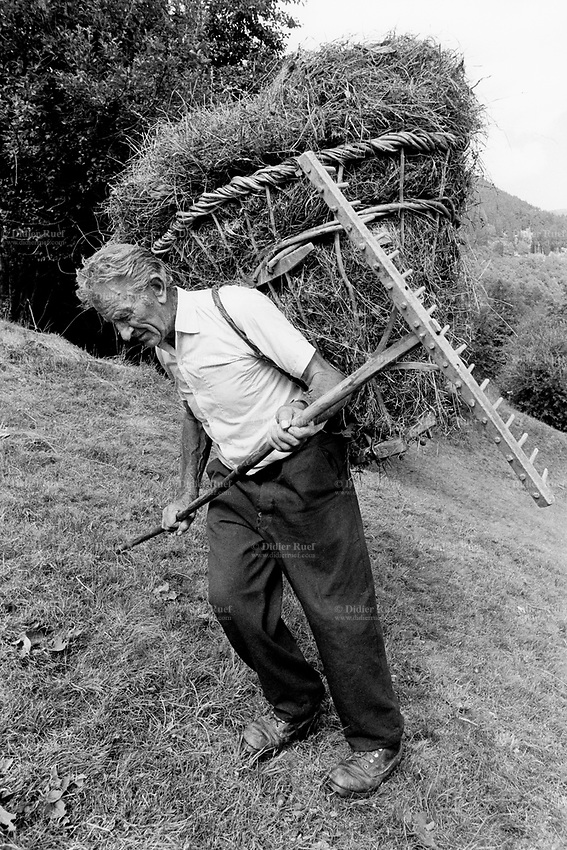 """Switzerland. Canton Graubunden. Soglio. Bregaglia valley. Making hay. An old man carries on his back hay in a wood basket, called """" campache"""". Manual labor. Labour force. Pasture. Swiss alpine farmers. Alps mountains peasants. © 1993 Didier Ruef"""