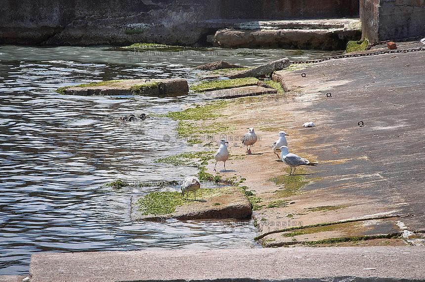 Seagulls in Mondello harbor<br /> Gabbiano nel porticciolo di Mondello