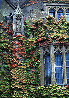 Halls of Ivy; covered walls on the campus of Oxford University. Oxford, England.