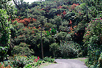 Road winding over high pass through tropical trees, Blue Mountains, Jamaica