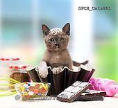 Xavier, ANIMALS, REALISTISCHE TIERE, ANIMALES REALISTICOS, cats, photos+++++,SPCHCATS801,#a#