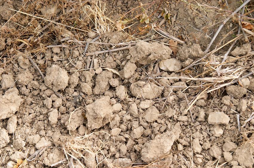 Chateau de Lascaux, Vacquieres village. Pic St Loup. Languedoc. Roussanne vine variety on very porous sandy soil. Terroir soil. France. Europe. Sand.