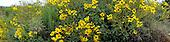Daisies in panorama stock photo