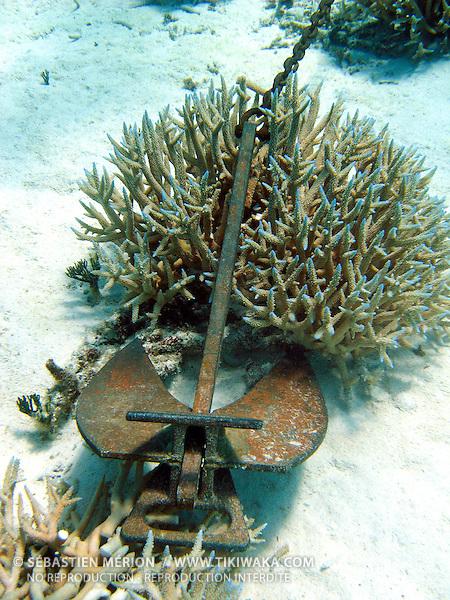Ancre dans le corail