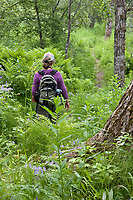 Hiker on the Dumpling mountain trail, Katmai National Park, southwest, Alaska.
