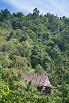 A lone uma (traditional Mentawai house) sprouts outs of dense rainforest on Siberut island, West Sumatra.